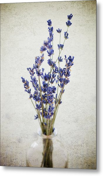 Metal Print featuring the photograph Lavender by Nicole Young