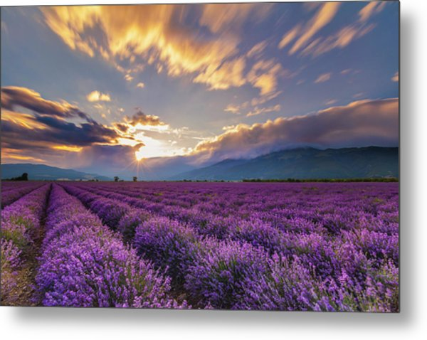 Lavender Sun Metal Print