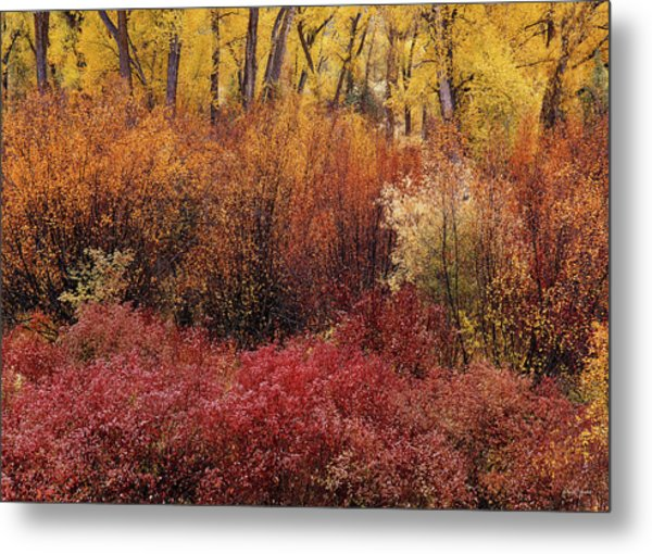 Layers Of Color Metal Print by Leland D Howard