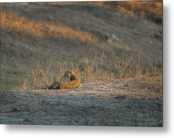 Metal Print featuring the photograph Lc10 by Joshua Able's Wildlife