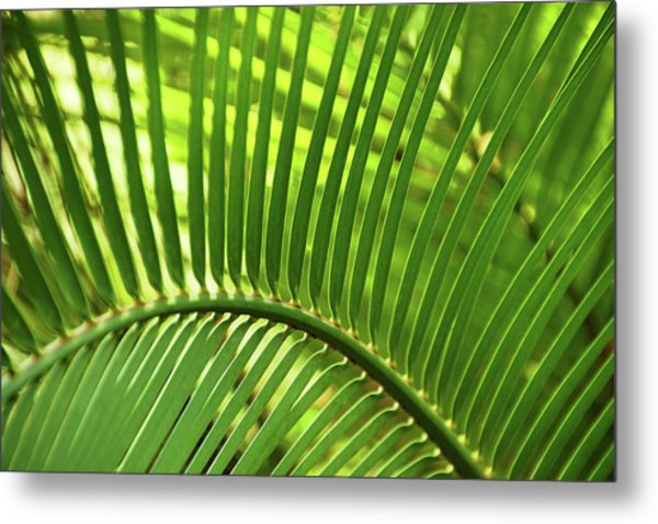 Metal Print featuring the photograph Leaf Abstraction I by Leda Robertson