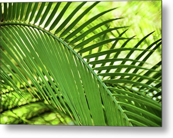 Metal Print featuring the photograph Leaf Abstraction II by Leda Robertson