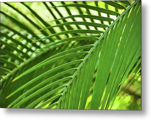 Metal Print featuring the photograph Leaf Abstraction IIi by Leda Robertson