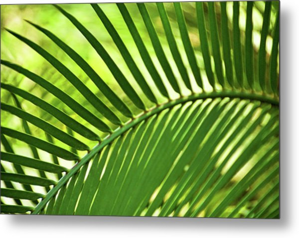 Metal Print featuring the photograph Leaf Abstraction Iv by Leda Robertson