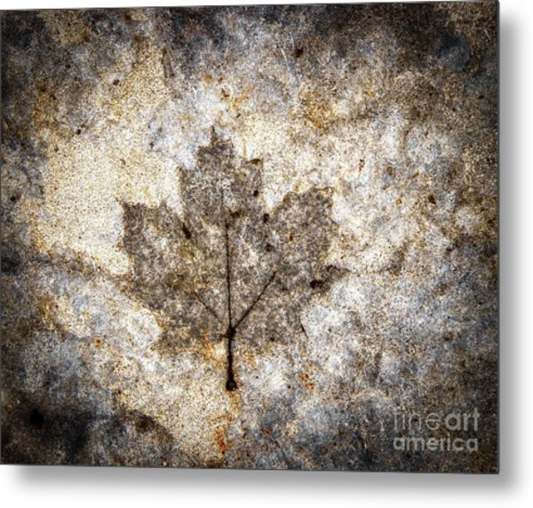 Leaf Imprint Metal Print