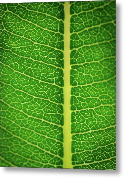 Leafy Detail Metal Print