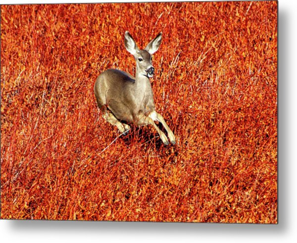Leaping Deer Metal Print
