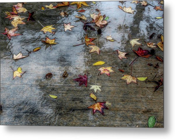 Metal Print featuring the photograph Leaves In The Rain by Alison Frank