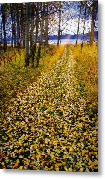 Leaves On Trail Metal Print