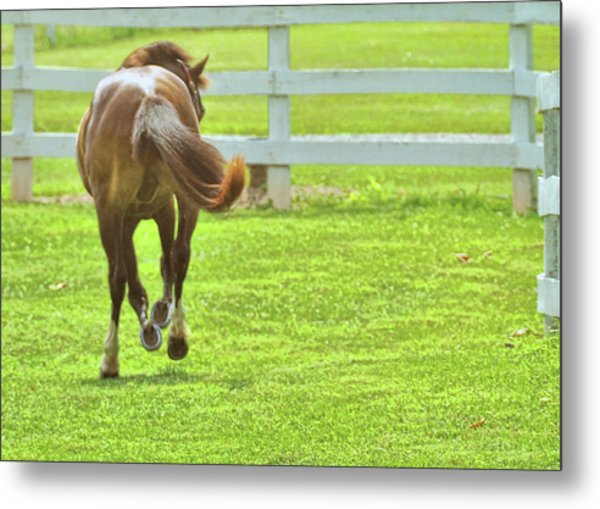 Let 'er Buck  Metal Print by JAMART Photography