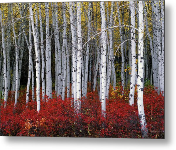 Light In Forest Metal Print
