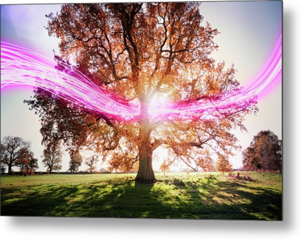 Light Trails Passing Around Tree Metal Print by Robert Decelis Ltd