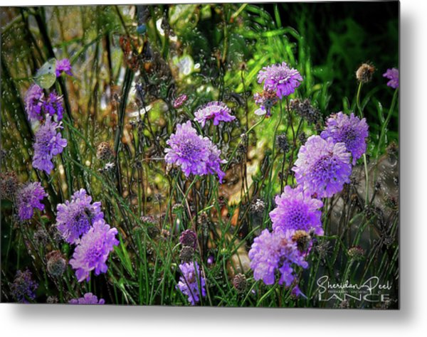 Lilac Jelly Pincushion Metal Print
