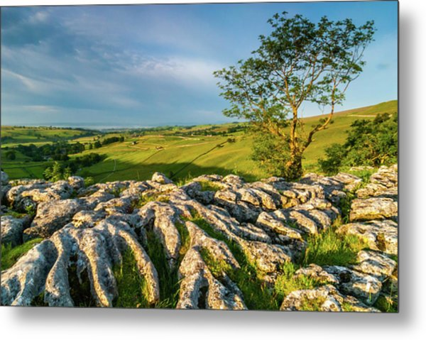 Limestone Pavement, Malham Cove Metal Print by David Ross