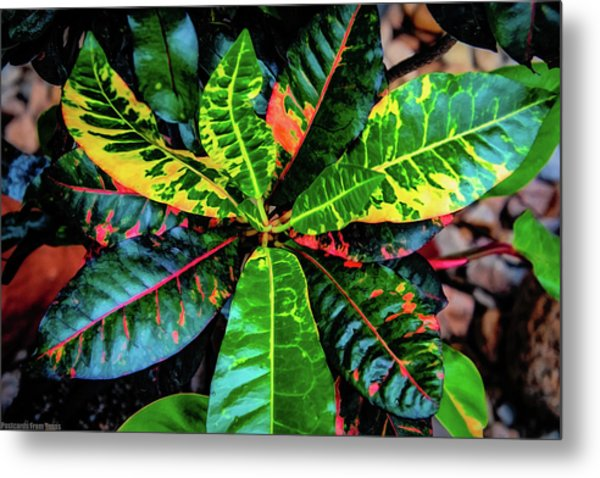 Liquid Tropical Colors Metal Print