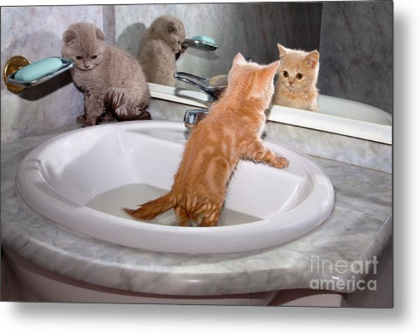 Little Kittens Bathing In The Sink Metal Print