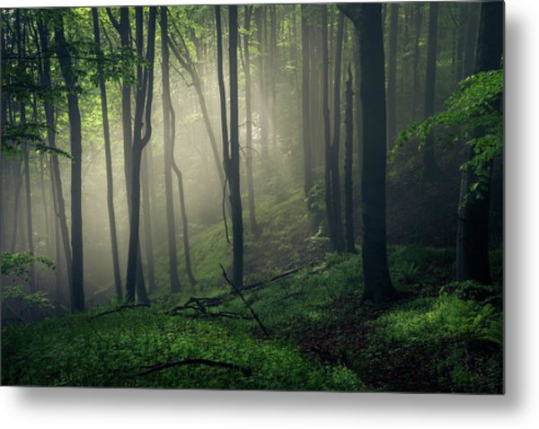 Living Forest Metal Print