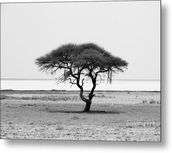 Lonely Acacia Tree In Etosha National Metal Print