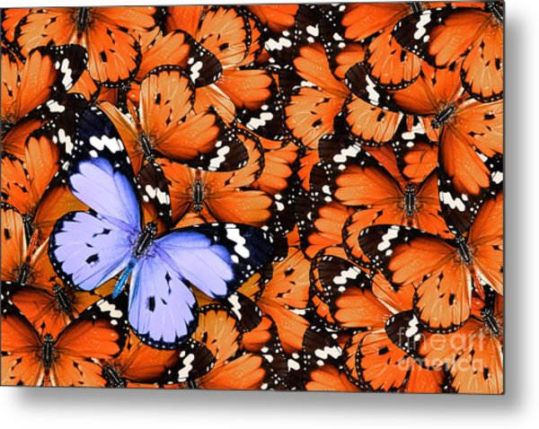 Lonely Lilac Butterfly Among Set Of Metal Print