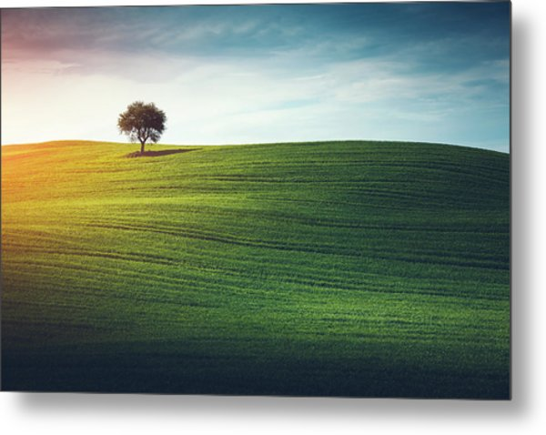 Lonely Tree In Tuscany Metal Print by Borchee