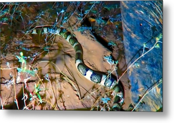 Metal Print featuring the photograph Longnosed Snake By A Desert Wash by Judy Kennedy