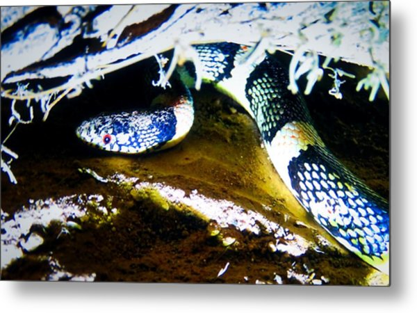 Metal Print featuring the photograph Longnosed Snake In The Desert by Judy Kennedy