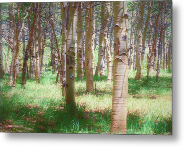 Lost In The Woods - Kenosha Pass, Colorado Metal Print