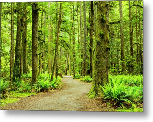 Lush Green Rain Forest Metal Print by Jordan Siemens