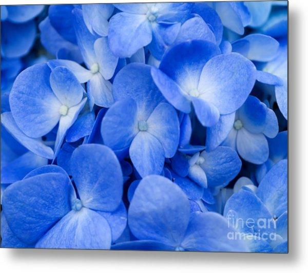 Macro Image Of Blue Hydrangea Flower Metal Print