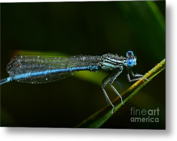 Macro Photography Dragonfly Metal Print