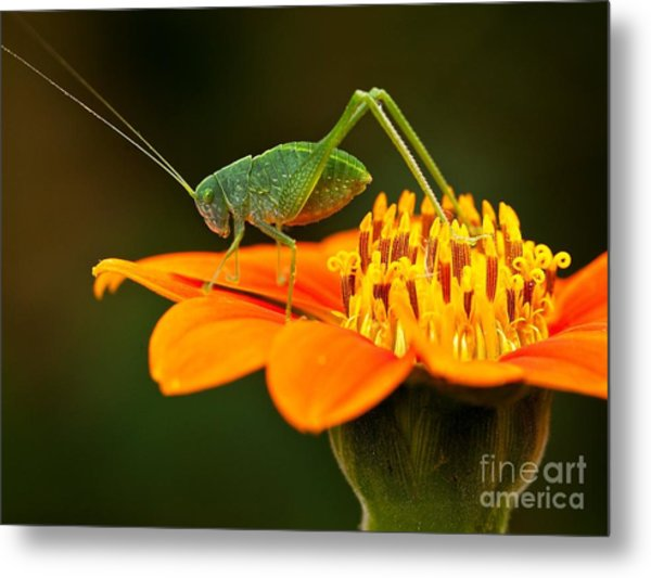 Macro Photos From Insects, Nature And Metal Print by Dudu Linhares