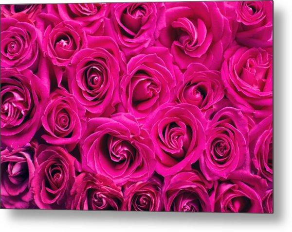 Magenta Roses Metal Print