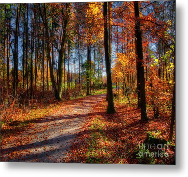 Magic Of The Forest Metal Print