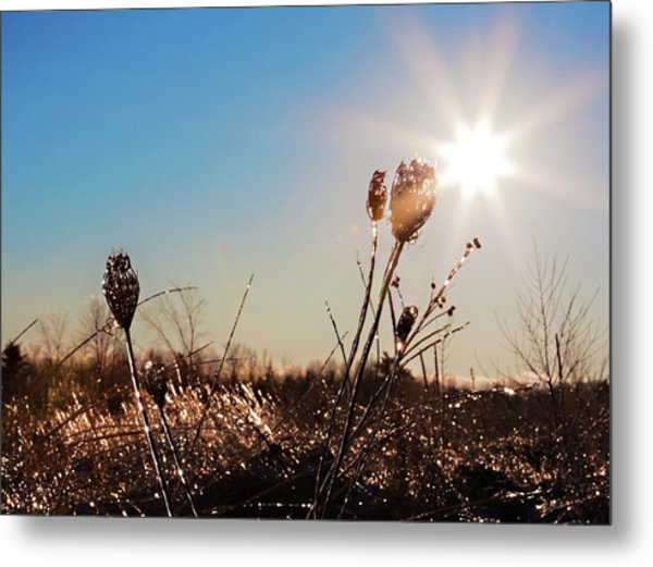 Metal Print featuring the photograph Magical Star Of Light And Ice by Tatiana Travelways