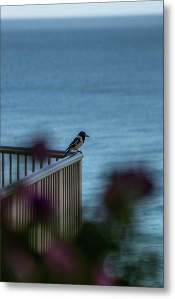 Magpie Bird Metal Print