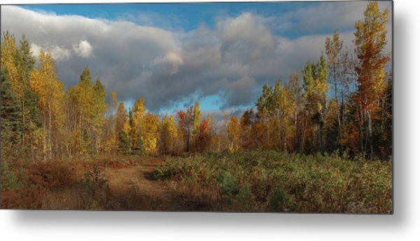 Metal Print featuring the photograph Maine Wilderness Color 2 by Rick Hartigan