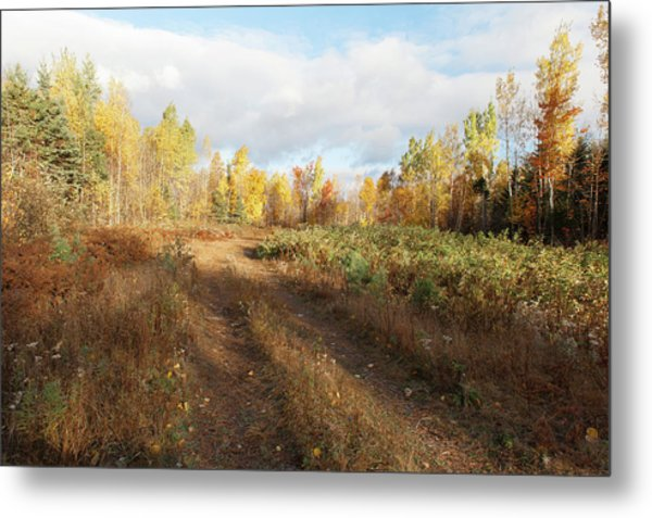 Metal Print featuring the photograph Maine Wilderness Color by Rick Hartigan