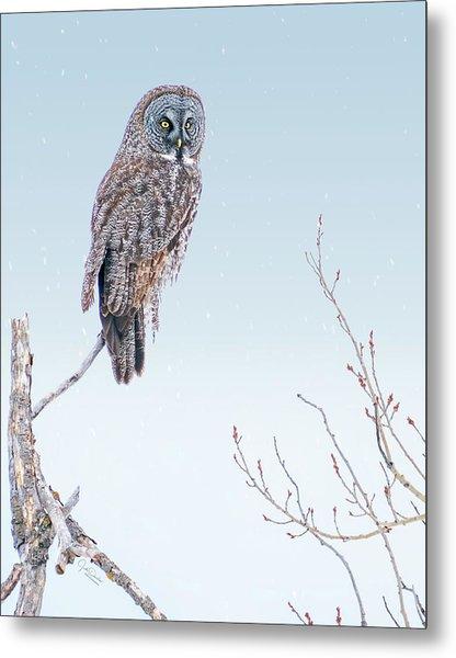Majestic Great Gray Owl Metal Print
