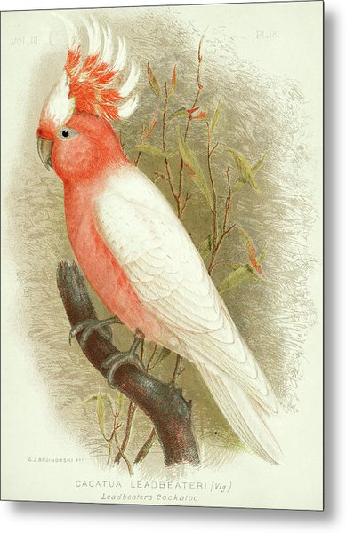 Major Mitchell's Cockatoo Metal Print