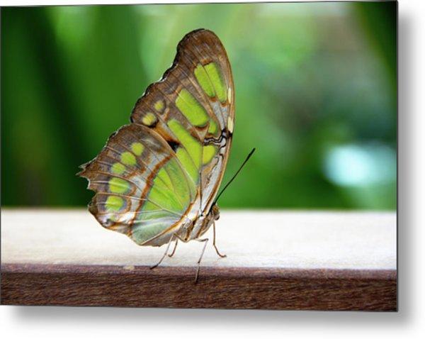 Malachite Butterfly Profile Metal Print