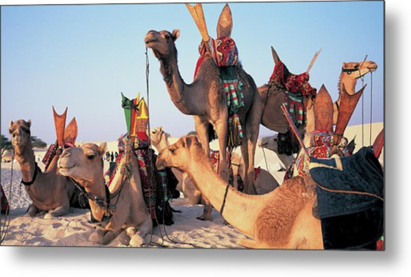 Mali, Timbuktu, Sahara Desert, Camels Metal Print by Peter Adams