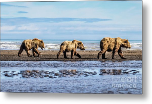 Mama Bear And Her Two Cubs On The Beach. Metal Print