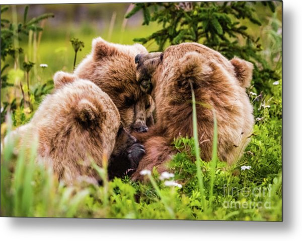 Mama Bear Nursing Her Two Cubs, Lake Clark National Park, Alaska Metal Print