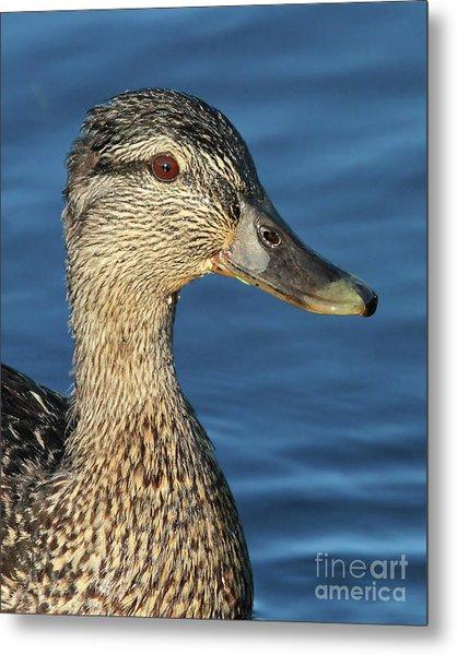 Mama Black Duck Metal Print