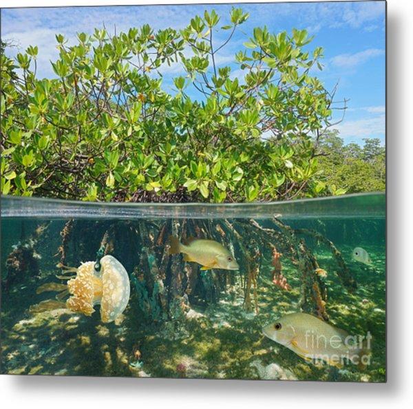 Mangrove Above And Below Water Surface Metal Print by Damsea