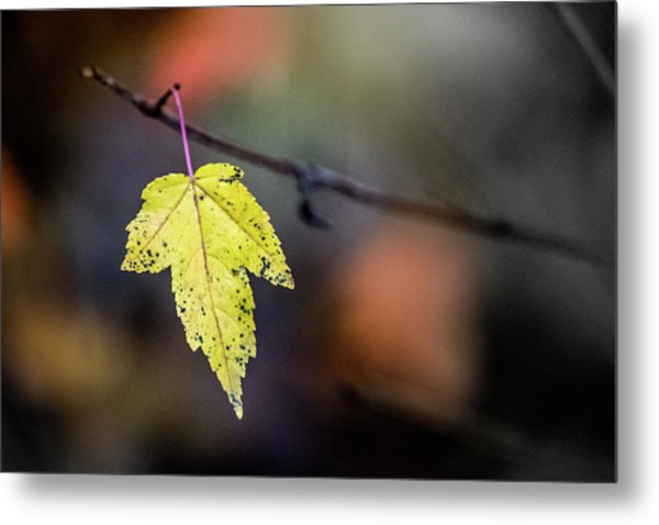 Metal Print featuring the photograph Maple Flag by Michael Arend
