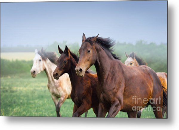 Mare With Foal Galloping In A Field Metal Print