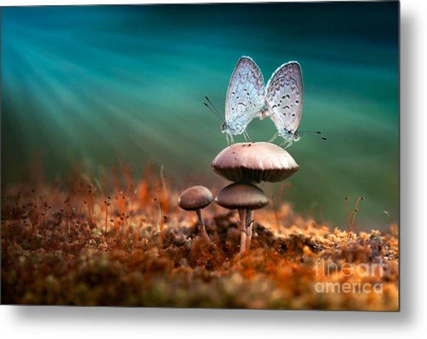 Mating Butterflies On Mushroom With Metal Print