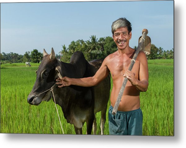 Matured Asian Farmer With Cow Metal Print