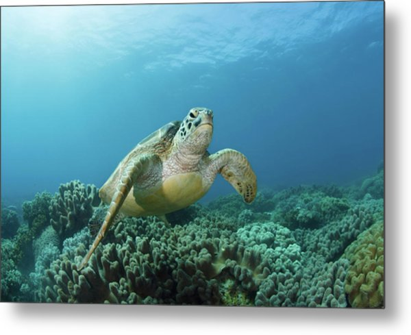 Meeting Metal Print by Nature, Underwater And Art Photos. Www.narchuk.com